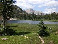 Trail Riding and Pack Trips in Wilderness High Uintah Mountains of Northeastern Utah!