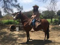 Horseback riding in Peru on peruvian Pasohorses, horse riding in Peru