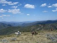 Snowy Range Horseback Tours endeavour in every way to make your ride the holiday of a lifetime