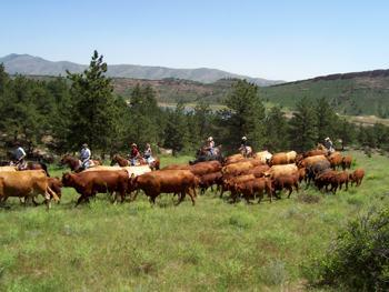 Sylvan Dale Guest Ranch in Loveland / Colorado