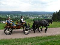 Trail riding and carriage rides in the Thuringian forest