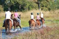 Kande Horse - Horseback Riding Vacations in Kande, Nkhata Bay South, Malawi - Riding in Africa!