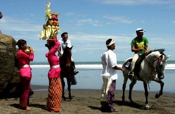 Bali Island Horse in Kuta, Bali / Bali