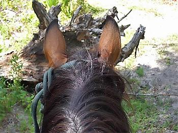 Makin´ Tracks Trail Rides in Fort Mc Coy / Florida