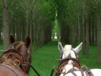 Estancia Los Patos - Horseback Riding Vacations in a Lodge not far from Buenos Aires, Argentina!