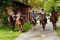 Riding vacations for adults and children in the Lüneburg heath on the equestrian farm Cohrs