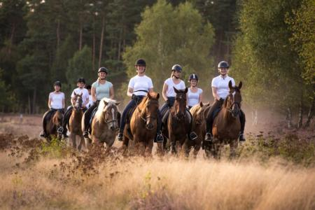 Holiday Company, B & B for Horses, Horse Trekking Station, Riding Stable, Pony Stable, B & B for Horsemen, Children's Holiday Company, Hay Hotel, Campground / Campsite in Bispingen