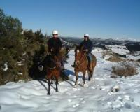 Horse trekking and instruction using natural horsemanship in Christchurch, New Zealand!