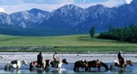 Inspiring horse riding tours in the wildnerness of Mongolia!