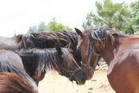 Horseback riding in Nepal  Nirvana´s Horses Resort offers Trailrides and Riding Holidays in Nepal