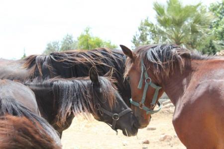 Nirvana´s Horses Resort in Chitwan / All Regions