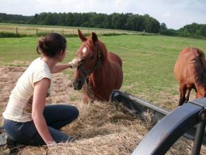 Property photo Horses 2