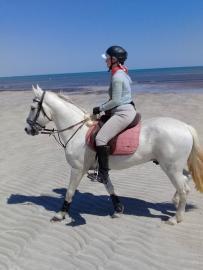 Beautiful Barb Horses