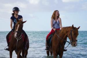 Bart- and Arab Fullblood ridinghorses