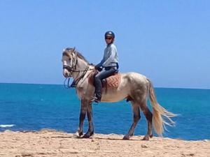 picture 3 from Ranch El-Manar Ocean rides