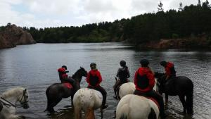 Horses cooling down on a trek