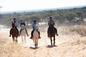 Guided riding tours on sure-footed horses