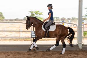 Classic dressage training
